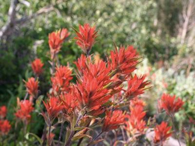 2006_7_13_Wildflowers_in_Park_City,_Utah_files_shapeimage_2.png
